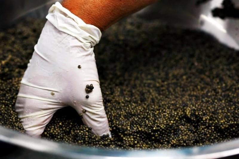 Икру приправляют солью и тщательно перемешивают
