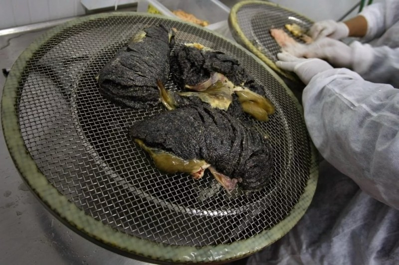 Как в Израиле производят черную икру. Фотография № 12.