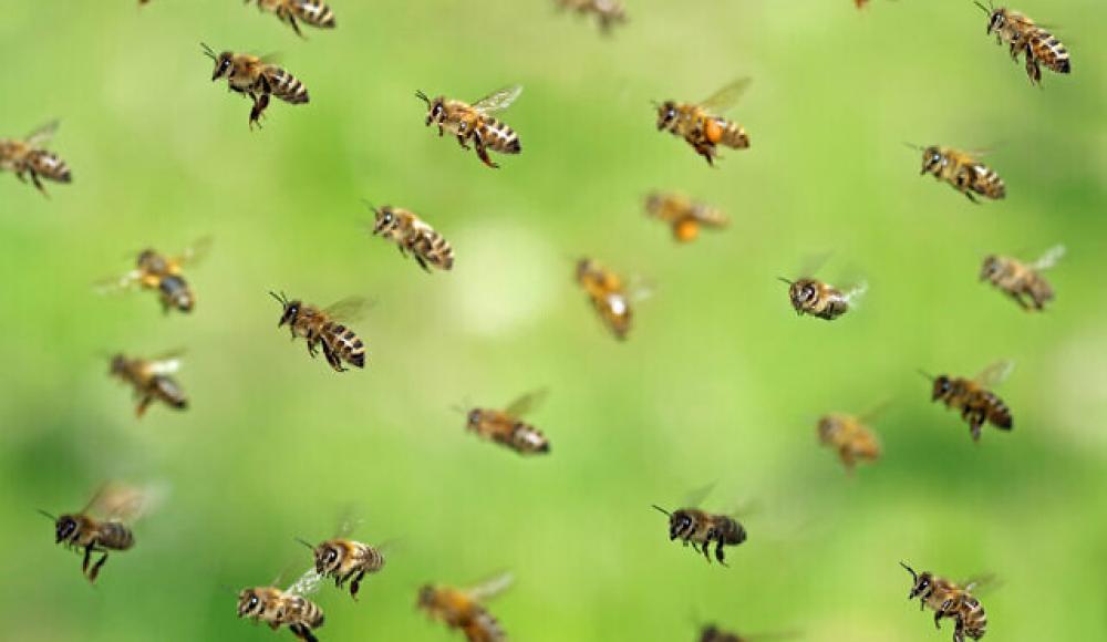 Израильские роботизированные ульи спасут глобальную популяцию пчел