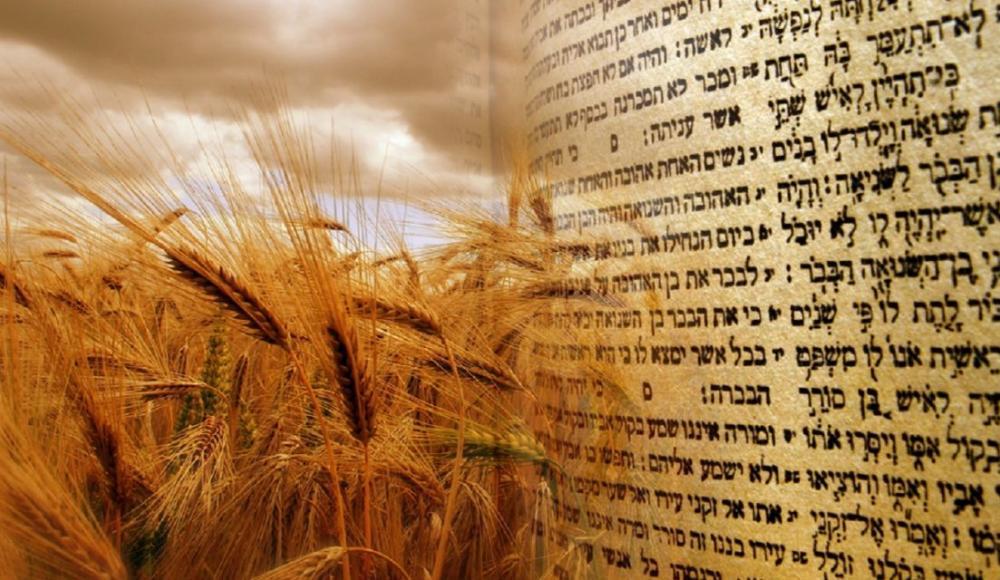 Когда отдыхают в Израиле в 2026 году