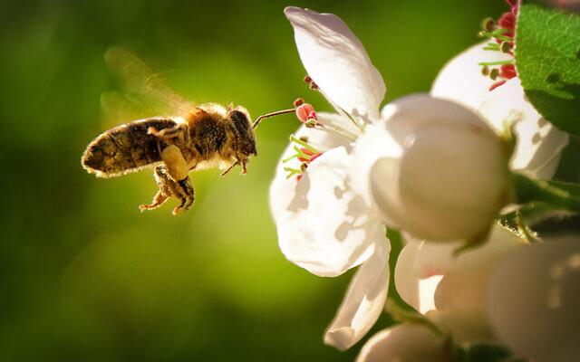 honeybee-640x400.jpg