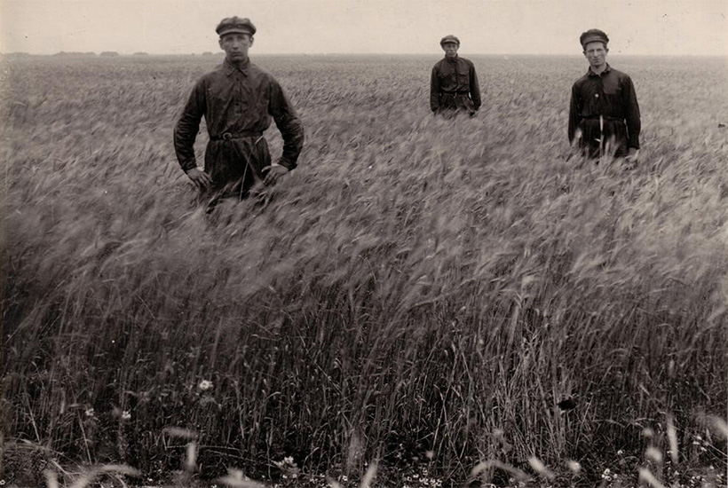 Three young men in a wheat field at the Ḥakla'i (Farmer) settlement, Dzhankoi, Ukraine, USSR, ca. 1920s. (YIVO Institute for Jewish Research, New York).jpg
