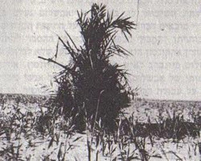 Фото Рана, 1931.jpg