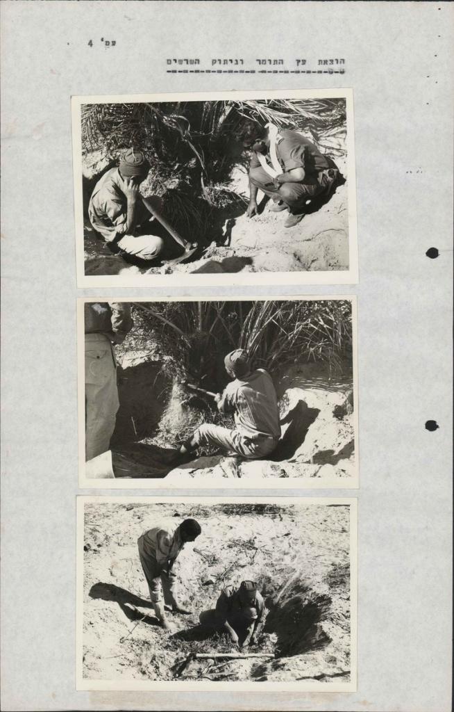 Извлечение пальмы из могилы при раскопках.jpg