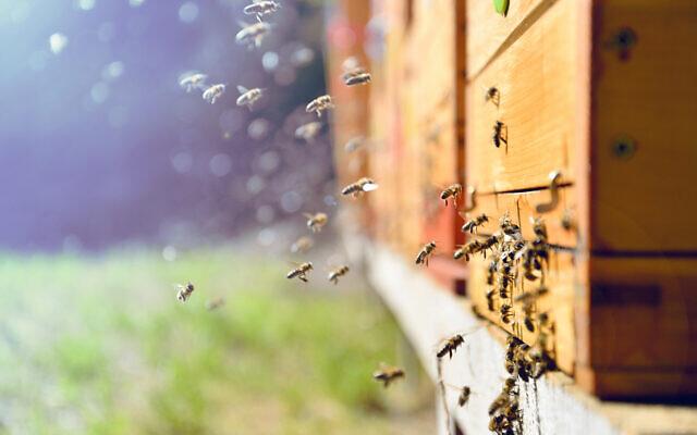 bees-in-hive-640x400.jpg