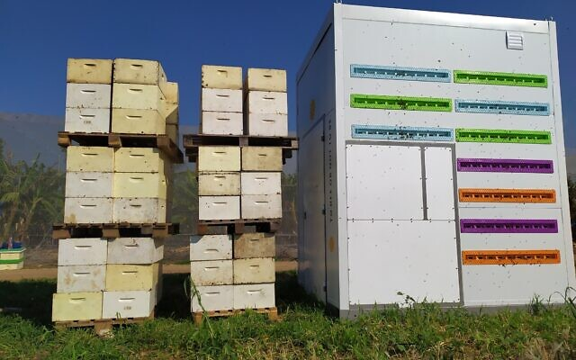 Beehome-compared-with-traditional-hives-640x400.jpg